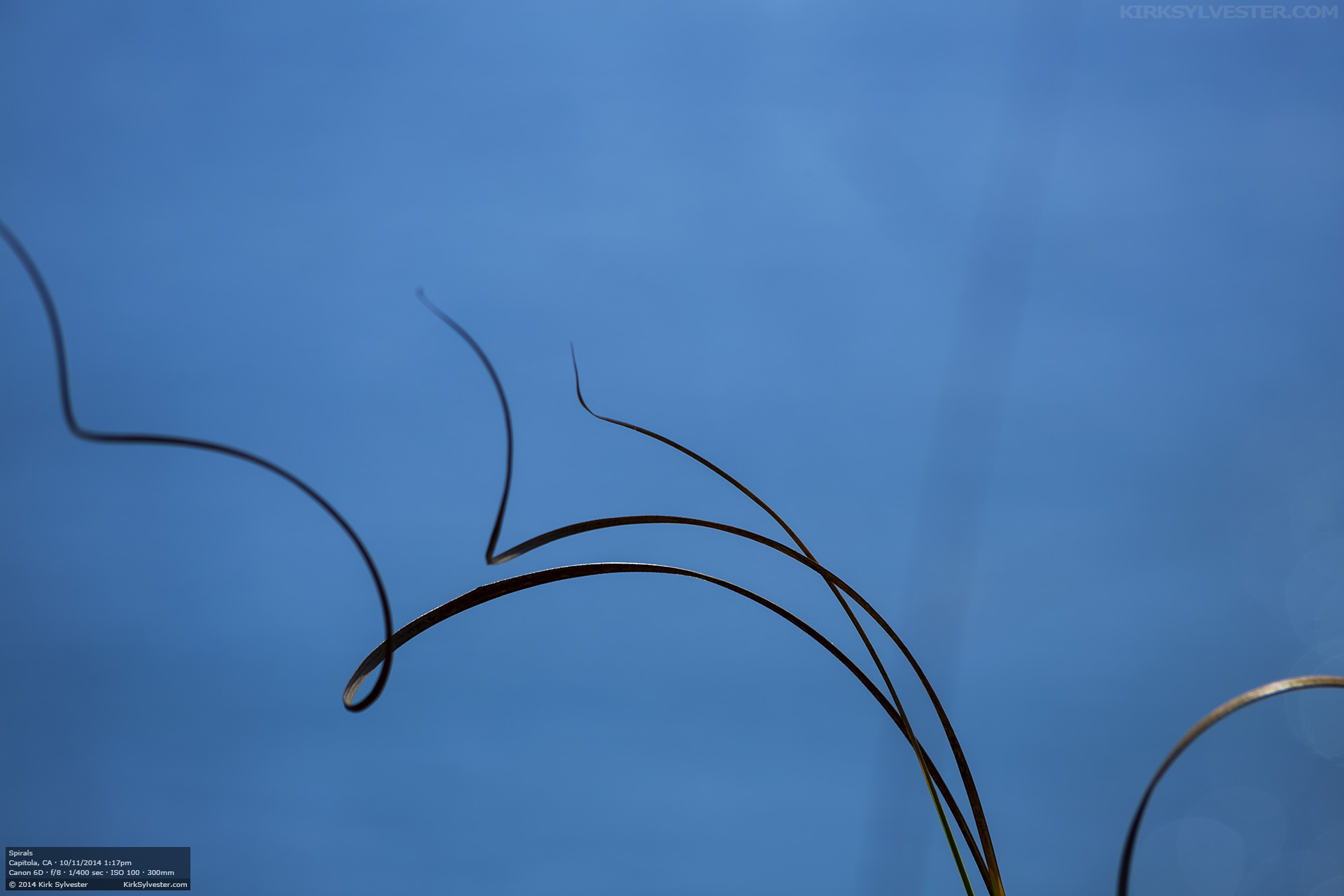 Spiral (Photo by Kirk Sylvester)