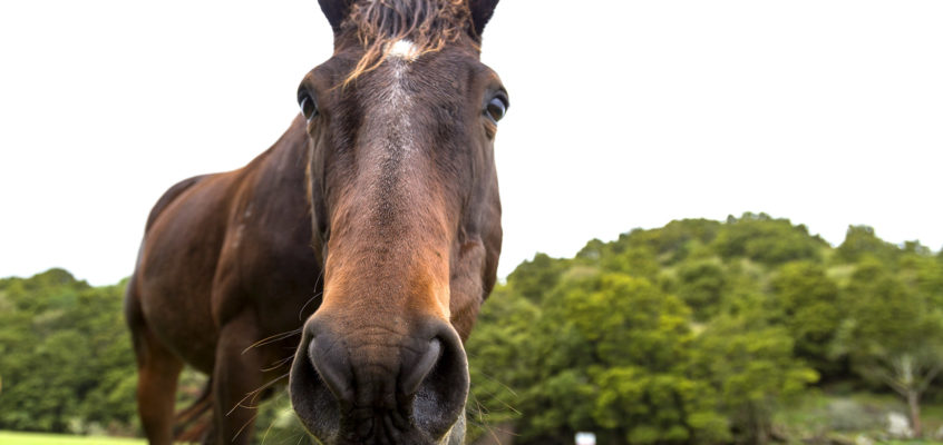 New Zealand's Friendliest Horse